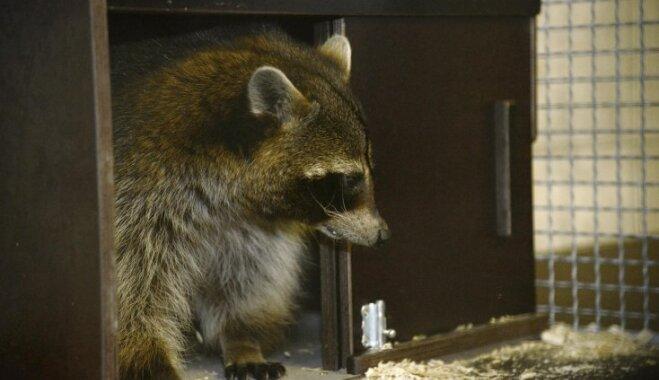 Rīgas zoo rekonstruēts karantīnas bloks, kur uzturas arī saimnieku pamestie bruņurupuči
