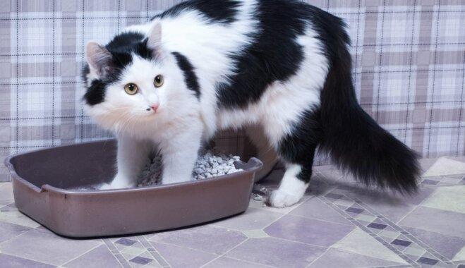 5 кошачьих привычек, которые хозяева понимают неправильно