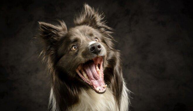 Kā atpazīt, ka sunim ir stress