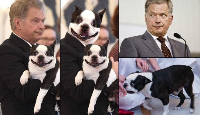Собака-улыбака президента Финляндии стала популярнее ее хозяина