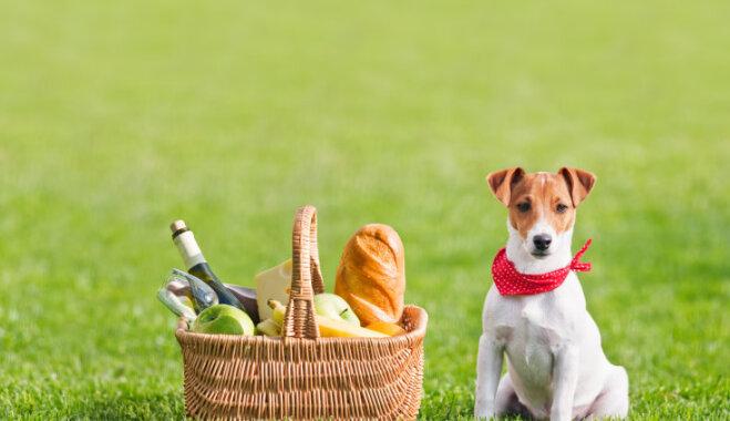 Здоровый пикник: как правильно сочетать продукты?