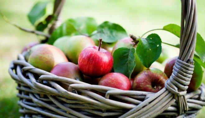 Vēsumā, kastēs un pat salmos – viedi padomi ražas uzglabāšanai