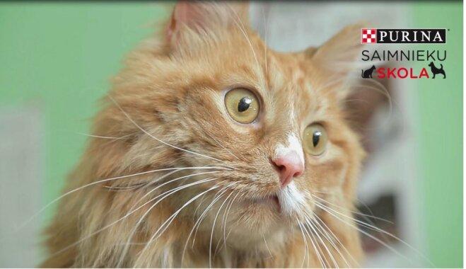 Video: Ko darīt, ja kaķim ir liekais svars