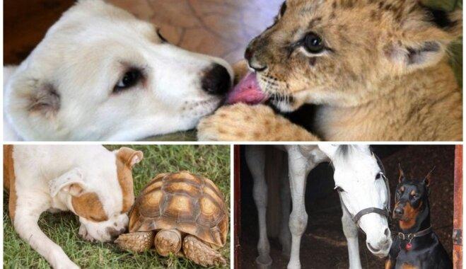 Ne tikai cilvēka labākais draugs. Suņi, kas sadraudzējušies ar citiem zvēriem