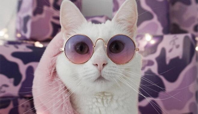 Stilīgā kaķenīte Capa, kura labprātīgi ģērbjas dažādās drēbītēs