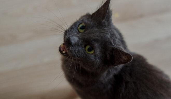 Adoptētā mīluļa saimnieks: kaķis izvēlējās mūs, nevis mēs viņu