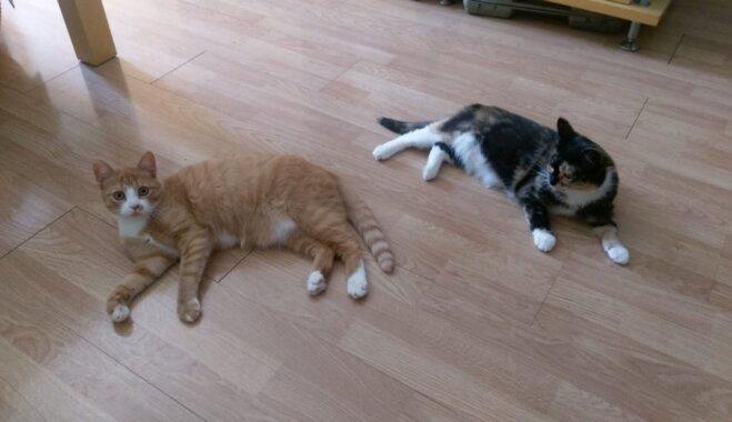 Veiksmes stāsts: Pieredzējusī saimniece Elīna uzreiz adoptē divus kaķus