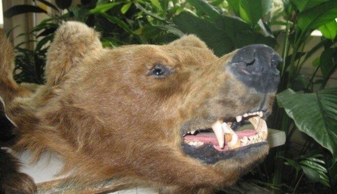 Kas jāzina, ievedot Latvijā apdraudēto sugu dzīvniekus, augus un no tiem izgatavotus suvenīrus