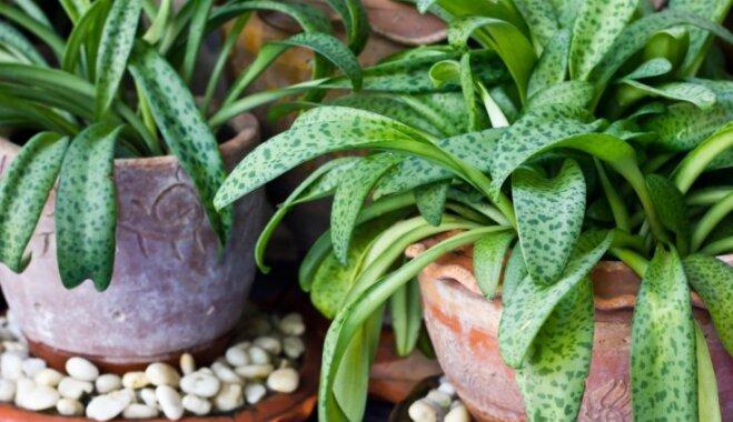 Лучшие натуральные удобрения для комнатных растений