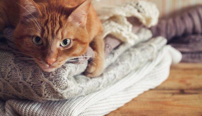 Kāpēc kaķiem patīk gulēt uz drēbēm