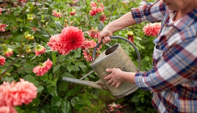 5 вещей, которые вы делаете в огороде напрасно