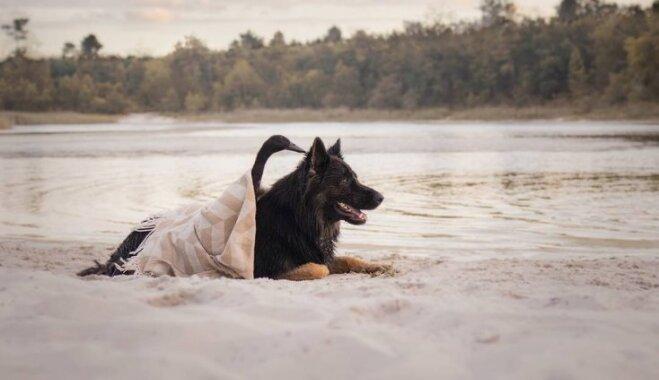 Par draugu var kļūt jebkurš: stāsts par pīles un suņa piedzīvojumiem