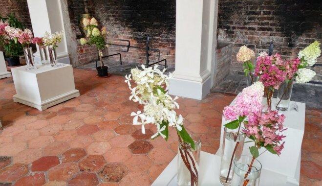 Foto: Hortenziju ziedu kupenu izstādē Rundāles pilī