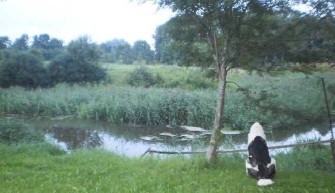 Aizkustinošs pašmāju stāsts: Suns jau divus gadus apmeklē mirušā saimnieka kapu