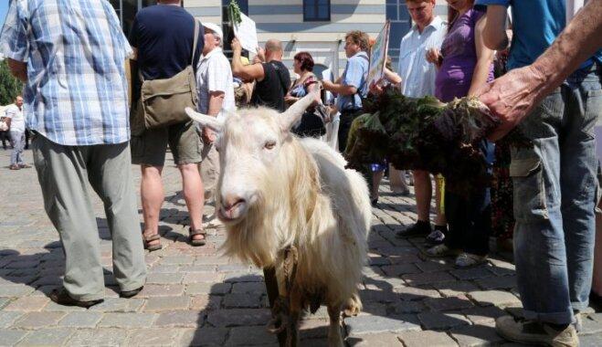 Rīgā notiks pirmais gājiens par dzīvniekiem