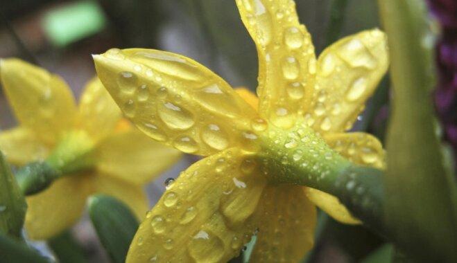 Будьте осторожны! 13 ядовитых растений, которые могут расти у вас дома и в саду