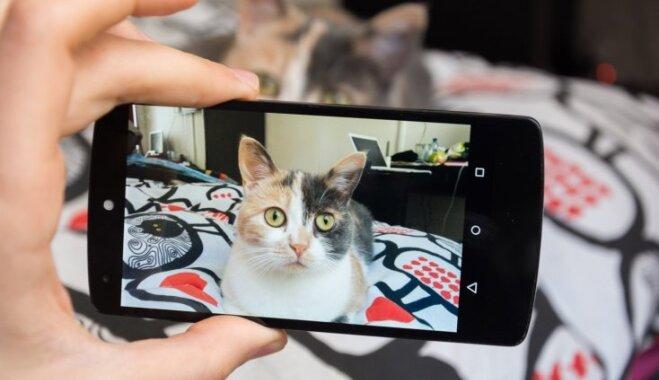 Ja publicē fotogrāfijas ar kaķi sociālajos tīklos: trīs būtiski noteikumi, kas jāievēro