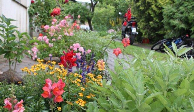 Harmonijā starp cilvēku un dabu: Kristīnes Makas sajūtu dārzs Brocēnos