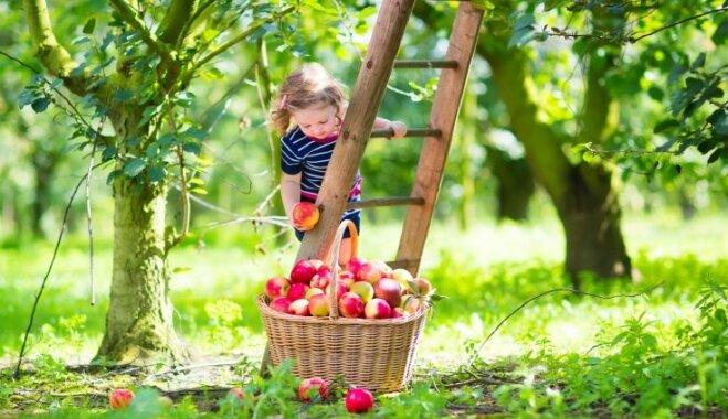 Dārza darbu kalendārs: septembris