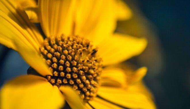 Kārtis septembrī sola – tev būs iespējas uzlabot dzīves kvalitāti
