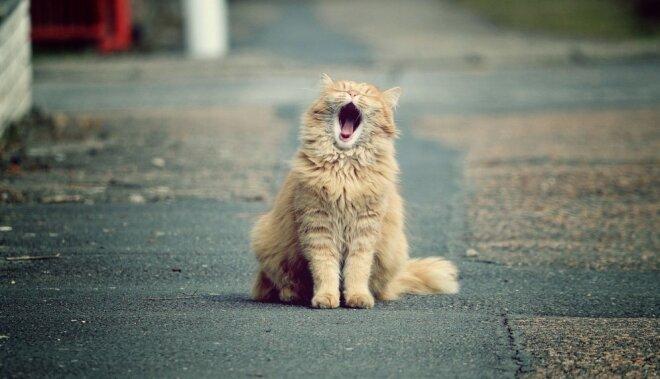 Smieklu jogas treneris: smiešanās nav joka lieta