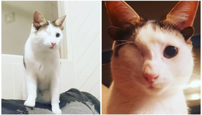 Izglābtais kaķēns Frenkijs, kuram ir viena actiņa un četras ausis