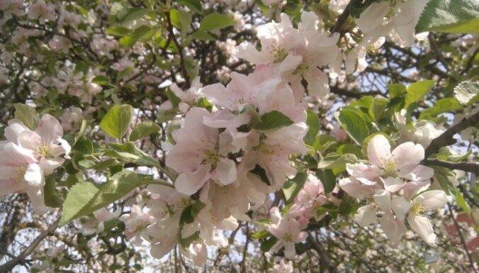 Маршрут на выходные: что посмотреть на берегах Лиелупе в Юрмале