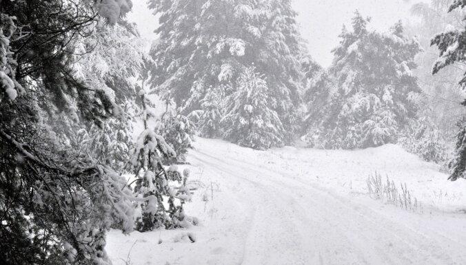 'Ziemeļlatvijas meži' no bankas piesaista 950 tūkstošu eiro finansējumu