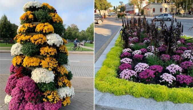 Foto: Ventspils greznojas rudenīgās ziedu kompozīcijās
