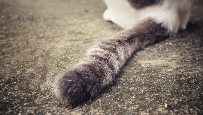 Interneta hits: Spēles laikā ar karogu tiek izglābts nelaimē nonācis kaķis