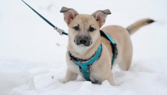 Vietām Pārdaugavā un Ķekavas novadā uzsnidzis 25 cm dziļš sniegs