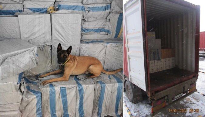 Foto: Muitas suns jūras konteinerā palīdz atklāt deviņus miljonus kontrabandas cigarešu