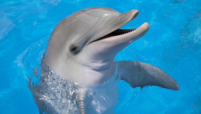 ВИДЕО: Дельфин поблагодарил рыбаков за спасение детеныша