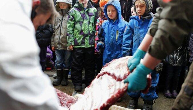 Latvijā protestē pret nežēlīgo žirafēna nogalināšanu Dānijas zoodārzā
