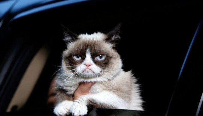 Grumpy Cat, Nīgrais kaķis