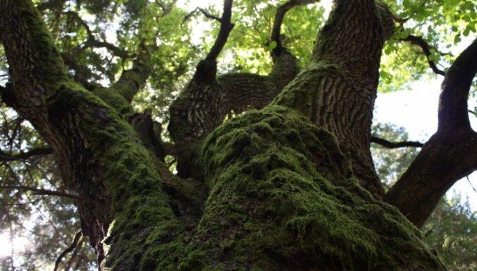 Ugunsdzēsēji palīdz zēnam nokāpt no koka