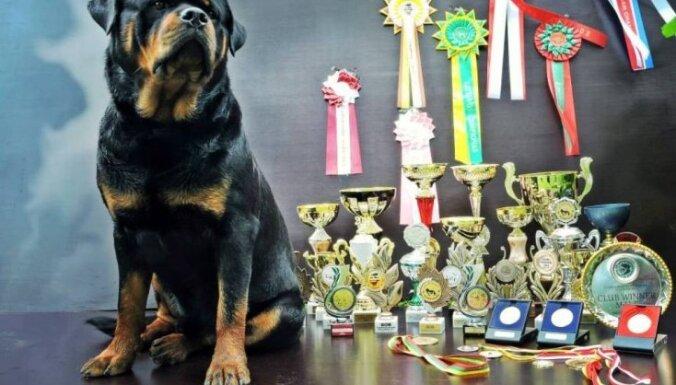 'Suņu suns' no Grundzāles - stāsts par vareno rotveileru Naisu
