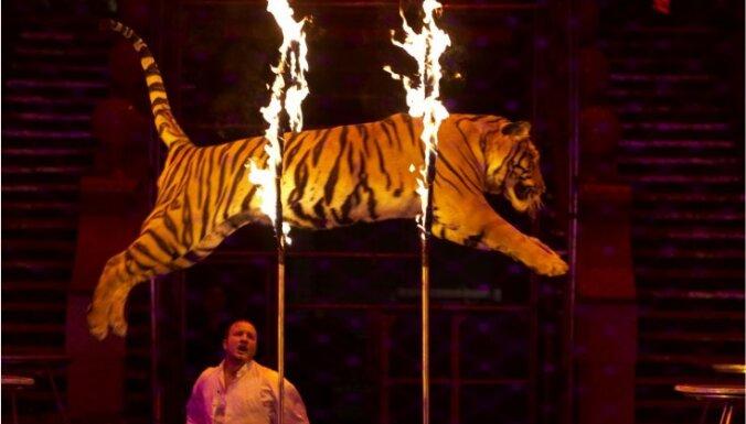 Некоторых зверей все же могут оставить в латвийских цирках
