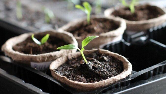 Когда высевать семена на рассаду по Лунному календарю в марте 2018 года