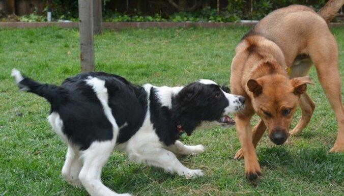 Берем в дом второго любимца. Золотые правила для дружного сосуществования двух собак