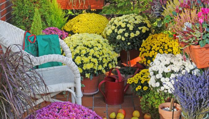 Календарь садовых работ: октябрь