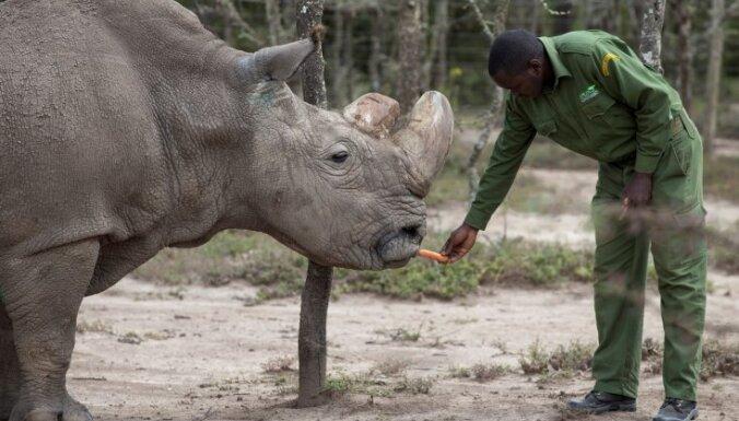 Умер последний на планете самец северного белого носорога