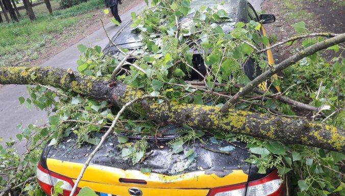 ФОТО: На проспекте Виестура на машину упала большая ветка