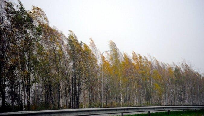 Vētras nogāzts koks Aknīstē dzēš divu cilvēku dzīvības
