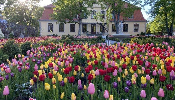Foto: Liepupes muižas dārzs pārtop ziedu paradīzē