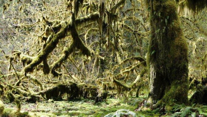 Mežonīgo rietumu dārgumi. 11 fantastiski dabas brīnumi ASV