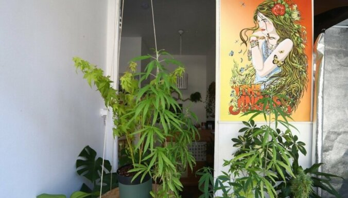 """Финские туристы в восторге от таллиннского магазина, где продают """"легкую марихуану"""""""