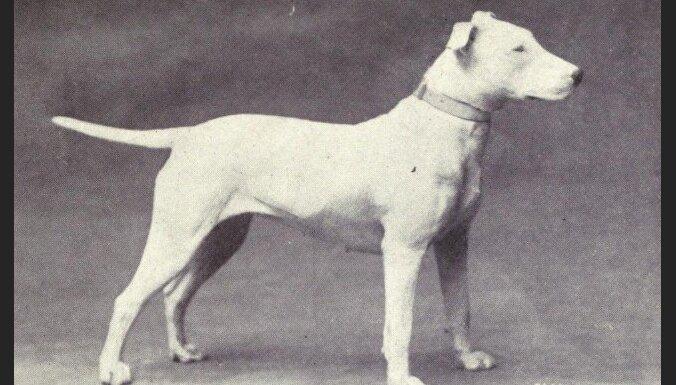 Тогда и сейчас. Как выглядели разные породы собак 100 лет назад