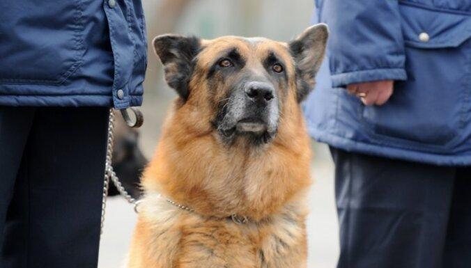 'Vecāki Jelgavai' grib skolās ar suņiem meklēt narkotikas