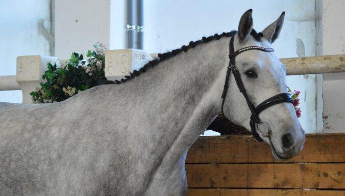 Jau otro reizi tiek organizēta Latvijas siltasiņu šķirnes zirgu skate